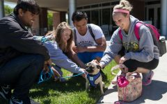 PHOTOS: Pet-A-Pug event helps students relieve stress before finals