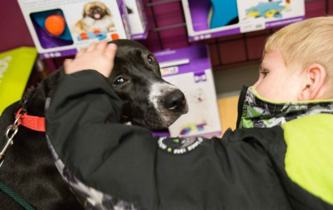 Ian pets Kakuna in the KHS retail store. Ian decided her name will remain Kakuna. The family picked out a leash and a squeaky ball. She loved the ball and instantly perked up. Ian delightedly squeaked it repeatedly.