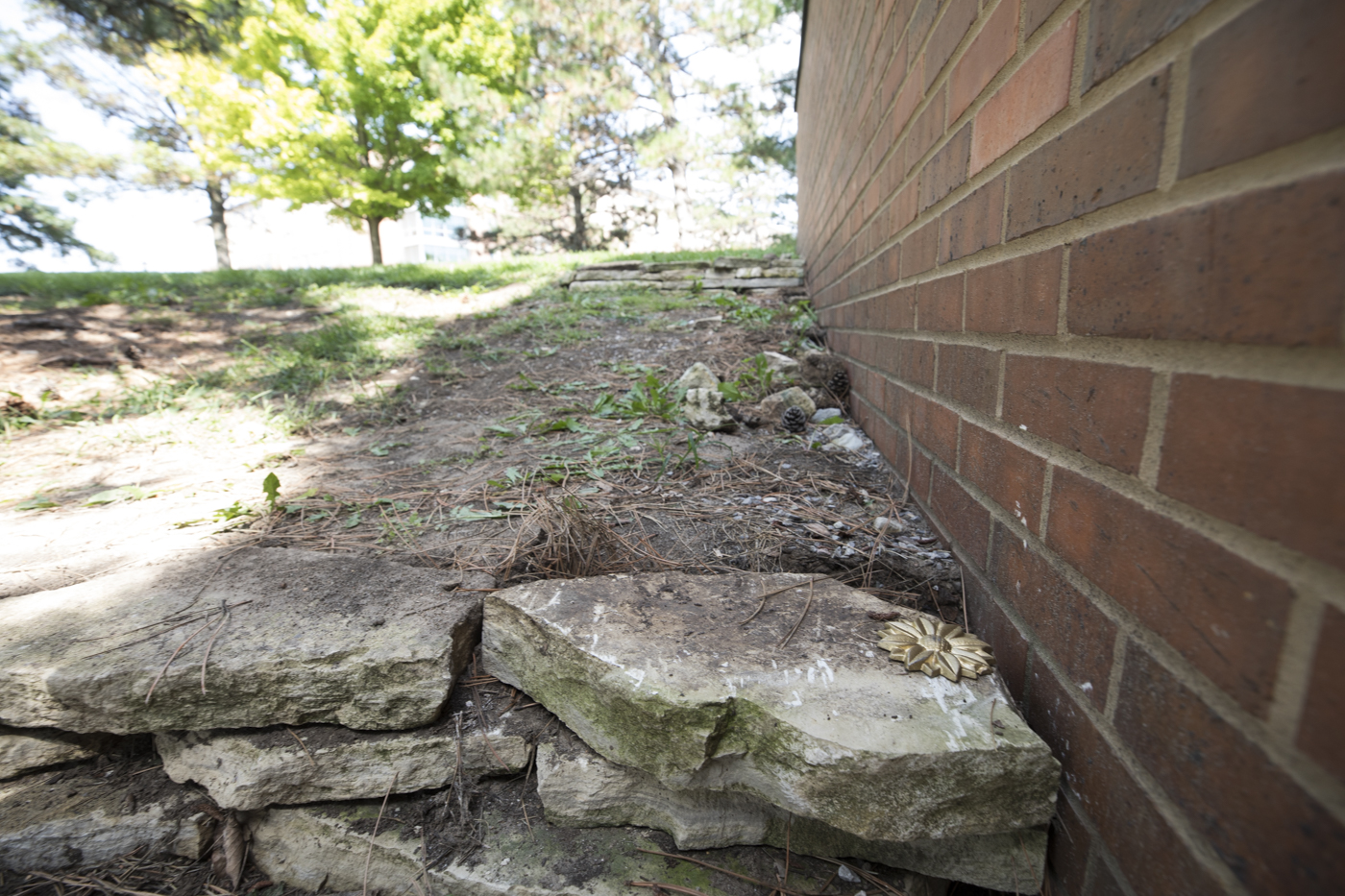 The+Sunflower+Medallion+was+between+this+rock+and+the+brick+wall.+Pine+needles+covered+it.+