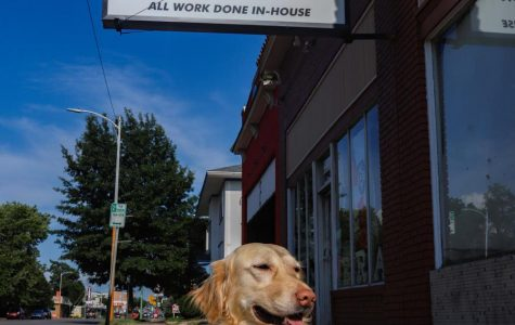 Dude the Dog, Moler's Camera's employee of the year