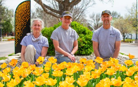 WSU's springtime gardens are rooted in tulips