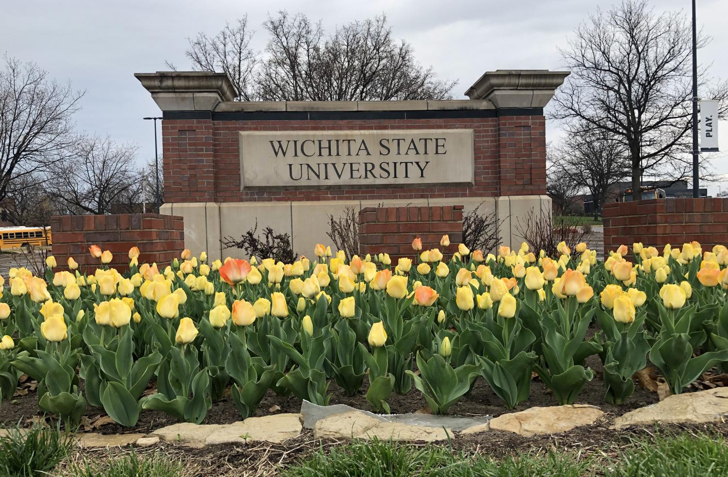 Tulips bloom by the WIchita State sign at the 17th Street entrance.