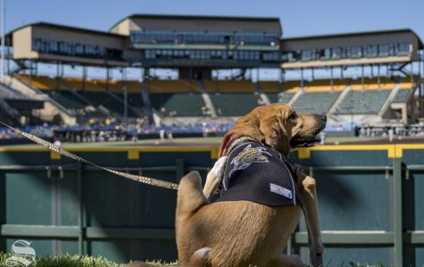 Bark in the Park returns to Eck Stadium on April 20, 2019. The Kansas Humane Society was on site with dogs available for adoption.