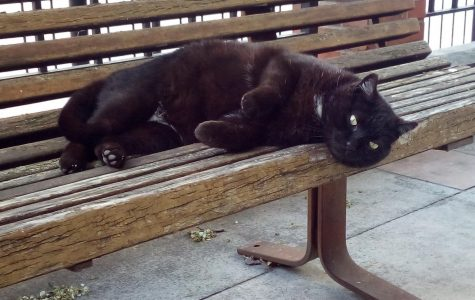 Meet Max, the campus stray with a loyal fanbase