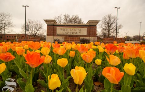 Tulips have bloomed at Wichita State.