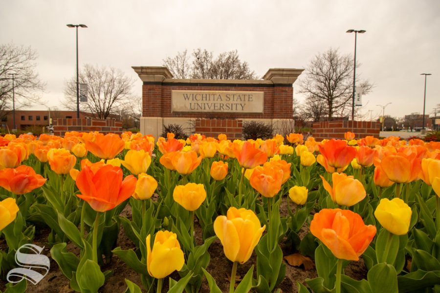 Wichita+State+University%27s+main+campus+is+known+for+its+multicolored+tulips%2C+which+bloom+every+spring.+The+university+announced+changes+for+the+spring+semester+on+Thursday.