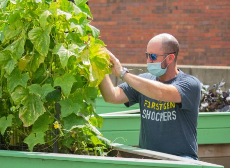 'More hands, less work': Community garden invites students to get involved